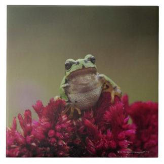 Japanese tree frog (Hyla japonica) on flowers, Ceramic Tile