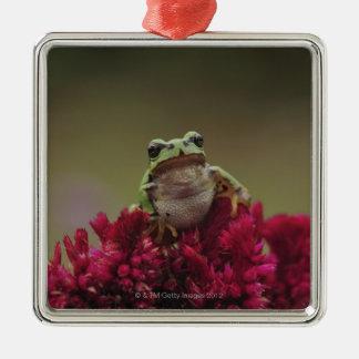 Japanese tree frog (Hyla japonica) on flowers, Metal Ornament