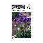 Japanese Waterlily, (Iris) flowers Postage Stamps
