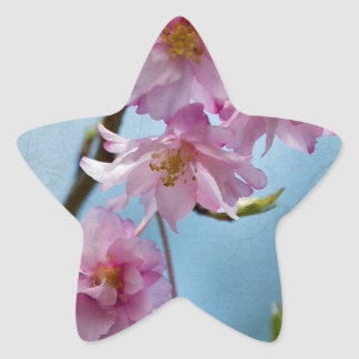 Japanese Weeping Cherry Blossoms with Textures Star Sticker