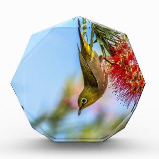 Japanese White Eye Bird,Taiwan Award
