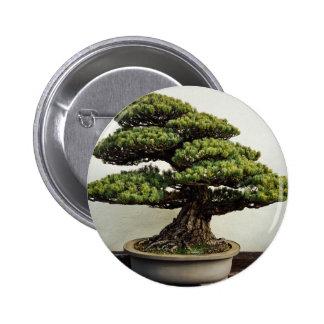 Japanese White Pine Bonsai Tree Button