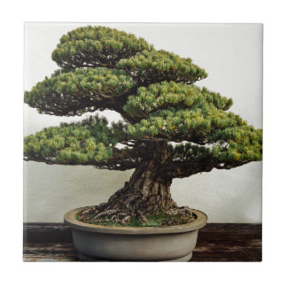 Japanese White Pine Bonsai Tree Ceramic Tile