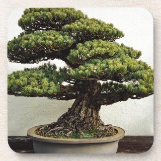 Japanese White Pine Bonsai Tree Coaster
