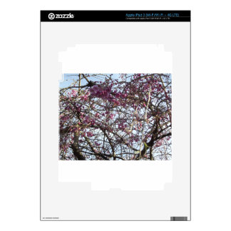 Japanese Willow iPad 3 Skins
