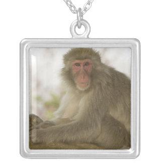 Japón, isla de Honshu, Kyoto, mono de Arashiyama Collar Plateado