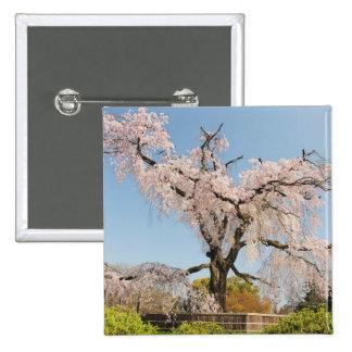 Japón, Kyoto. Cerezo que llora debajo del cielo az Pin Cuadrada 5 Cm