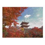 Japón, Kyoto, pagoda en color del otoño Tarjetas Postales