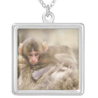 Japón, Nagano, Jigokudani, bebé del mono de la Colgante Cuadrado