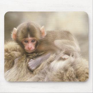 Japón, Nagano, Jigokudani, bebé del mono de la nie Mousepad