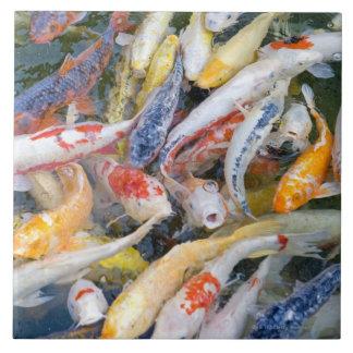 Japón, Tokio, pescado de la natación del primer Azulejo Cuadrado Grande