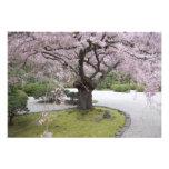 Japonés Gardern, Portland, Oregon de Portland, Fotografías