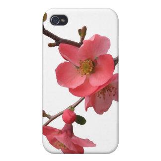 Japonica florece caso del iPhone 4 iPhone 4 Coberturas