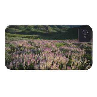 Jarbridge Wilderness and Mountains, Nevada, Spur iPhone 4 Case