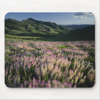 Jarbridge Wilderness and Mountains, Nevada, Spur Mousepads