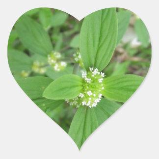 Jardín agradable y parque de la flor verde colcomanias corazon