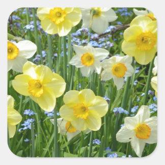 Jardín amarillo hermoso del narciso pegatina cuadrada