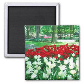 Jardín blanco rojo de los tulipanes imán cuadrado