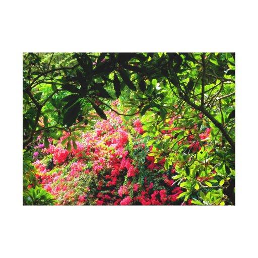 Jardín botánico del cráter de Koko Lona Estirada Galerías