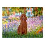 Jardín - caniche rojo oscuro #1 tarjetas postales