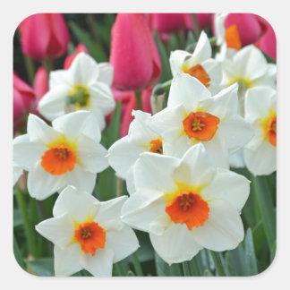 Jardín colorido de los tulipanes y de los narcisos pegatina cuadrada