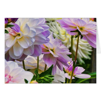 Jardín colorido del verano de la flor de la dalia tarjeta de felicitación