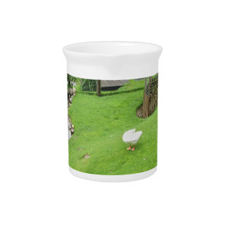Jardín con la charca jarras para bebida