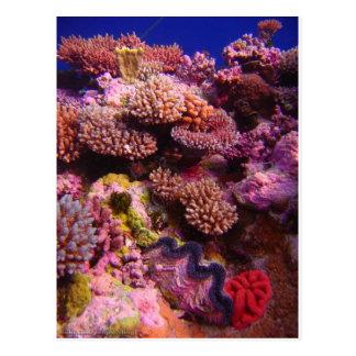 Jardín coralino tarjetas postales