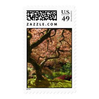Jardín de Acer Palmatum Portland del arce japonés