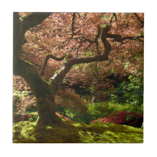 Jardín de Acer Palmatum Portland del arce japonés Azulejos