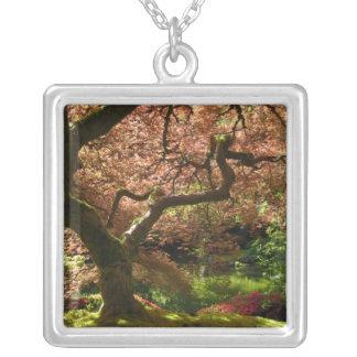 Jardín de Acer Palmatum Portland del arce japonés Grímpola