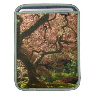 Jardín de Acer Palmatum Portland del arce japonés Mangas De iPad