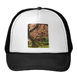 Jardín de Acer Palmatum Portland del arce japonés Gorras
