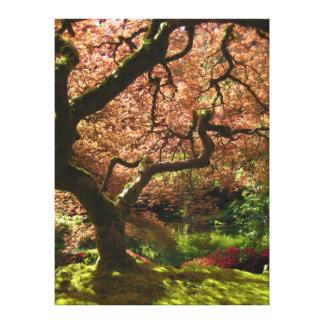 Jardín de Acer Palmatum Portland del arce japonés Lona Envuelta Para Galerias