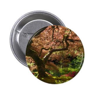 Jardín de Acer Palmatum Portland del arce japonés Pins