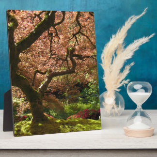 Jardín de Acer Palmatum Portland del arce japonés Placa Para Mostrar