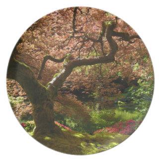 Jardín de Acer Palmatum Portland del arce japonés Plato De Cena