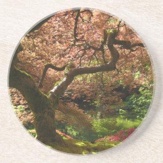 Jardín de Acer Palmatum Portland del arce japonés Posavasos Cerveza