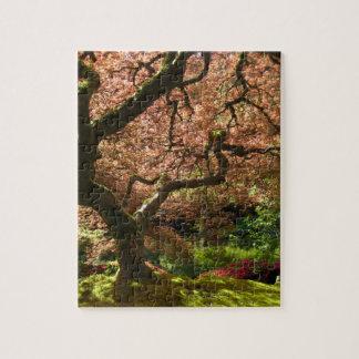 Jardín de Acer Palmatum Portland del arce japonés Rompecabeza