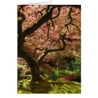 Jardín de Acer Palmatum Portland del arce japonés Tarjetón