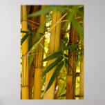 Jardín de bambú poster