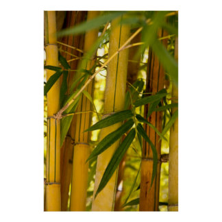 Jardín de bambú póster