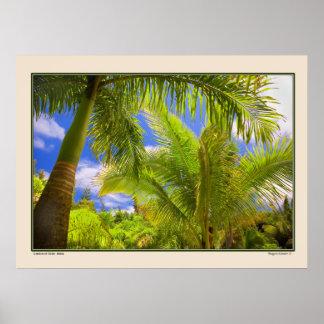 Jardín de Eden - palmas - Maui Hawaii Póster