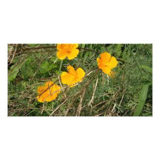 Jardín de flores amarillo tarjetas fotograficas personalizadas
