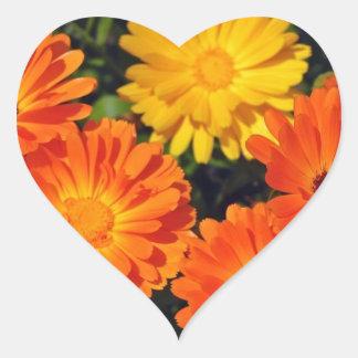 Jardín de flores anaranjado hermoso del zinnia pegatinas corazon