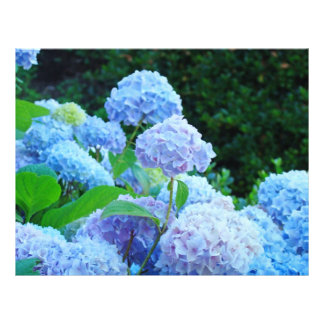 Jardín de flores azul de papel del Hydrangea del l Plantilla De Membrete