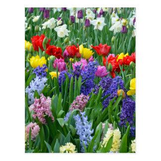 Jardín de flores colorido de la primavera postal