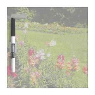 Jardín de flores de Snapdragon Tablero Blanco