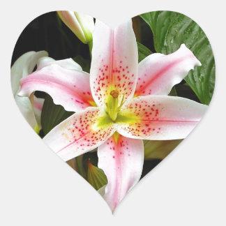 Jardín de flores del lirio rosado y blanco colcomanias corazon