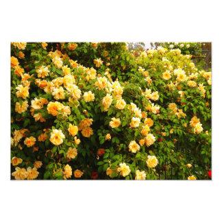 Jardín de flores impresiones fotográficas